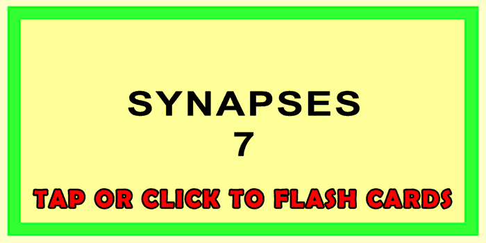 Synapses Front
